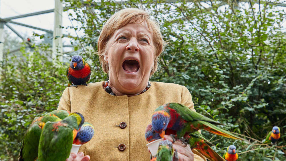 https://www.merkur.de/bilder/2021/09/23/91000934/27145225-angela-merkel-cdu-bundestagswahl-wahlkreis-nachfolger-vogelpark-39NG.jpg